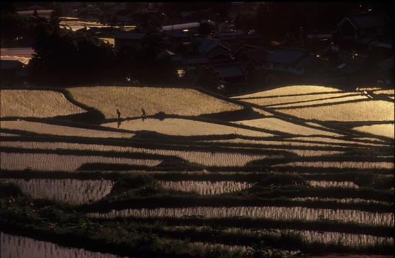 従三位 景観写真卿 北野 武夫様  「棚田夕景」