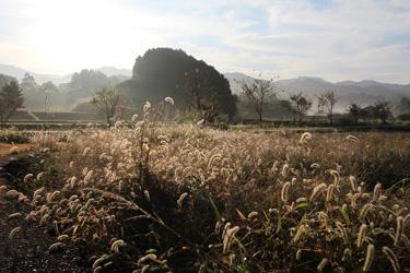 菊谷 光代様  「秋枯れの檜隈寺への道」