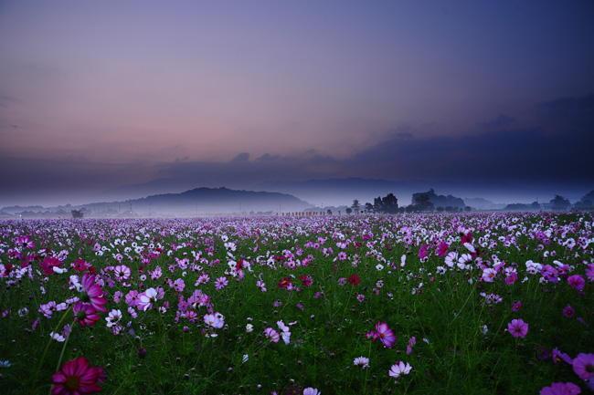 従二位 雅写真大納言  宮口 達夫様 「花園の夜明け」