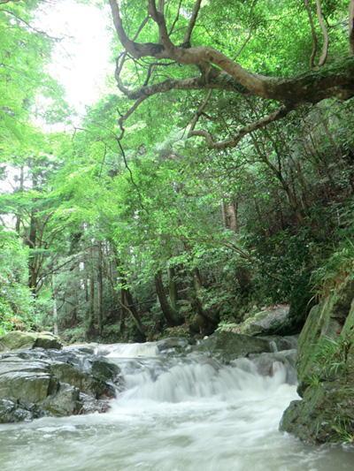 従三位 景観写真卿 田畑 新二様 「緑さす清流」