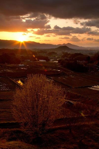 正一位 神々之山写真太政大臣 白石 博様 「サンシュユの咲くころ」