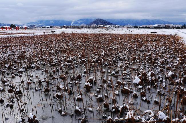従三位 三山写真卿 辻本 博幸様 「藤原京の冬景色」