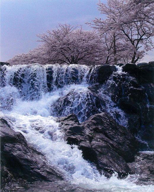 従二位 大和写真大納言 市川 英明様 「明日香川の春」