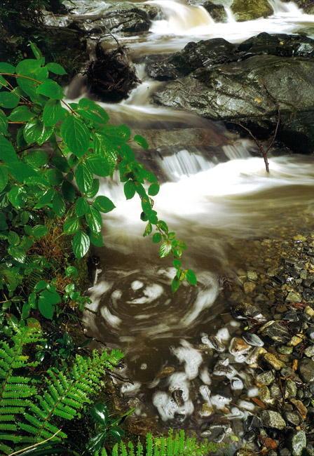 従三位 三山写真卿 辻本 博幸様 「雨後の飛鳥川」