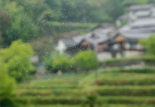 R14位登り山優樹『雨もよう」.jpg