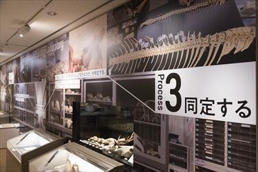 R1190425_kankyo_0241.jpg