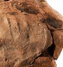 古代人の指紋
