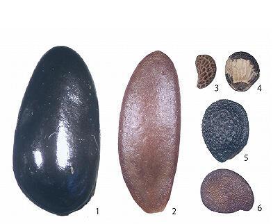 ⑩分類された種2.jpg